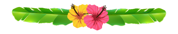 picture of Hibiscus flowers as divider